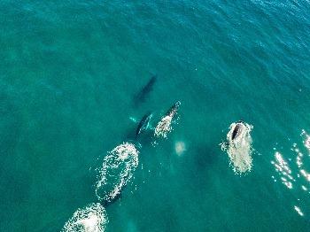 Ballenas desde Gyrocopter
