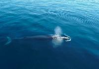 Tour Avistamiento de ballenas – Costa Rica