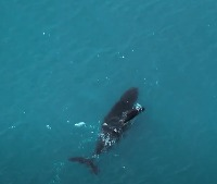 Whale watching with calf